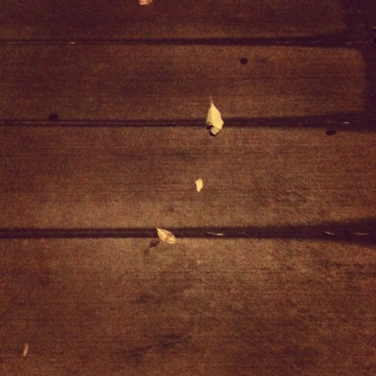 Leaves on the walk toward home.