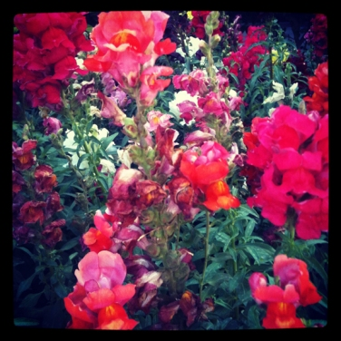 flowers on central