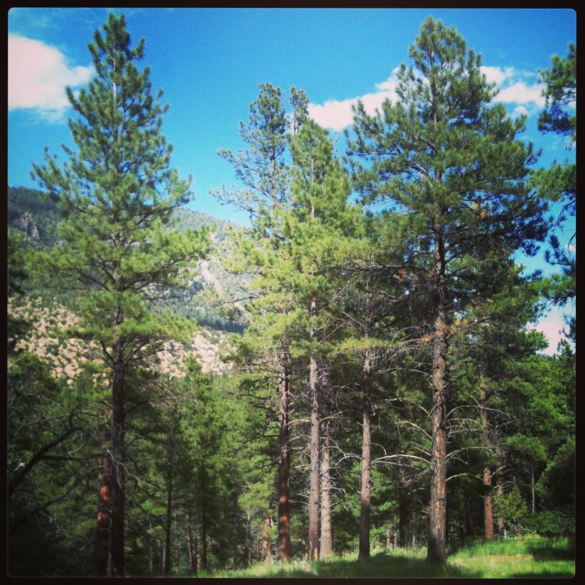 forest near buffalo park (c) 2013 holly troy
