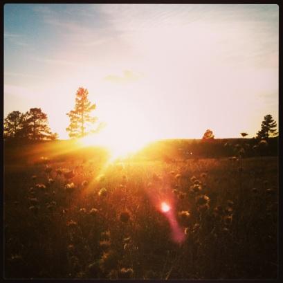 Sun! (c) 2014 Holly Troy