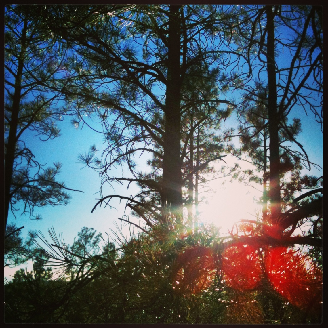 sun shining in the pines (c) 2014 Holly Troy