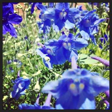 blue flower faces (c) 2014 Holly Troy