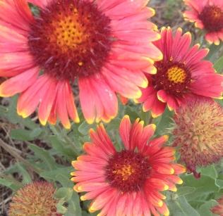 Flagstaff Flowers!
