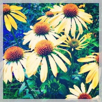 Summer Flowers in Flagstaff (c) Holly Troy 2014