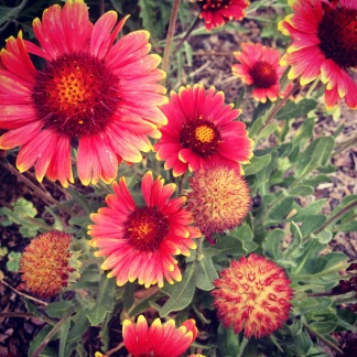 summer flowers in flagstaff (c) Holly Troy