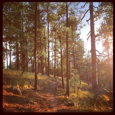Single track az trail (c) holly troy 2014