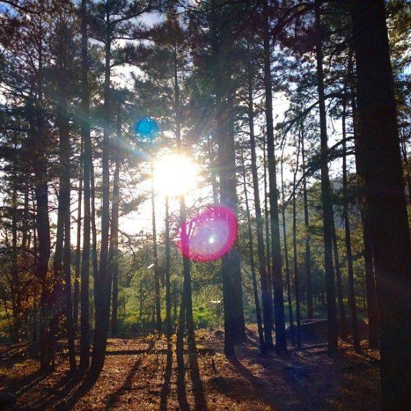 sun through the forest (c) 5.2015 Holly Troy
