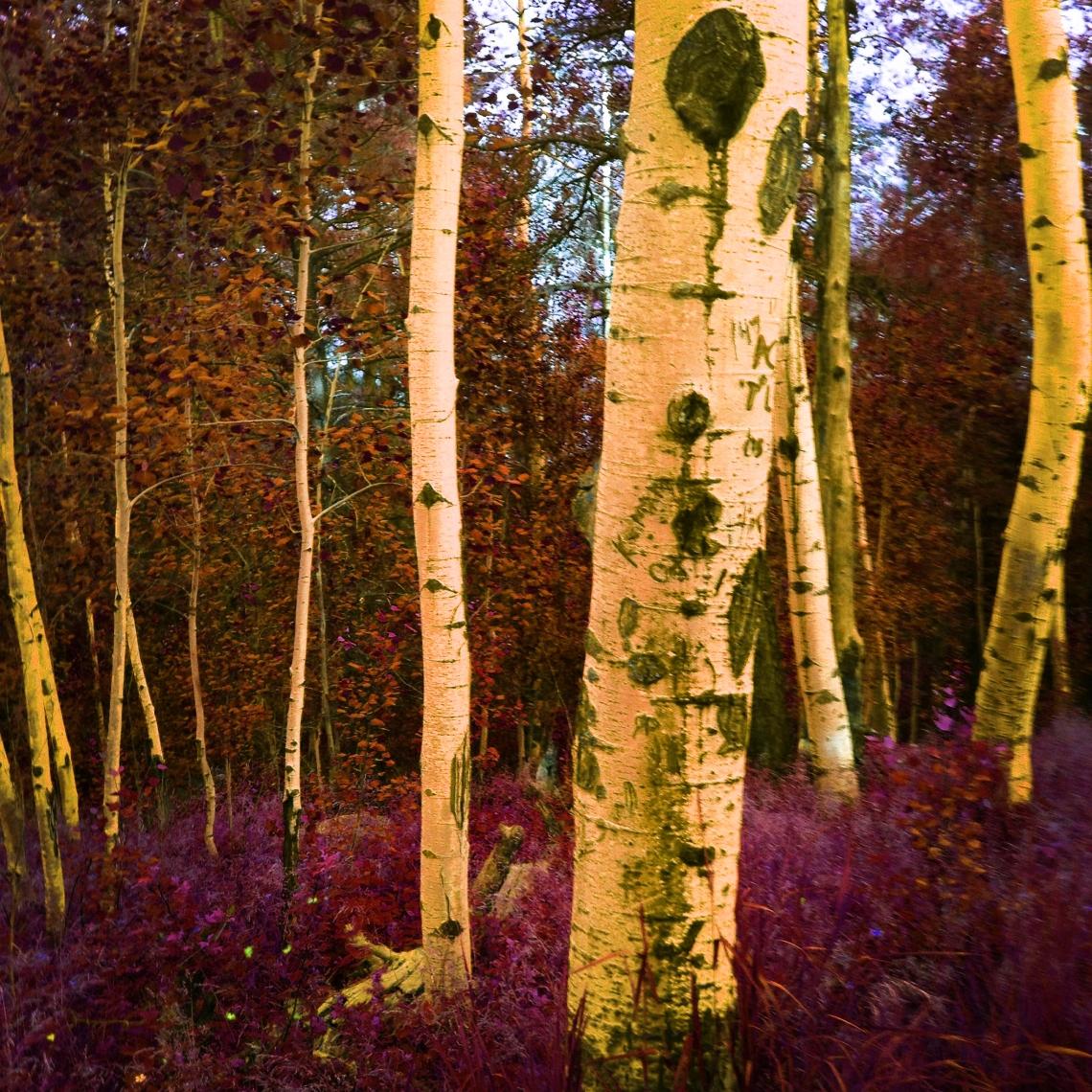 Psychedelic Aspen - Photography © 2015 Holly Troy