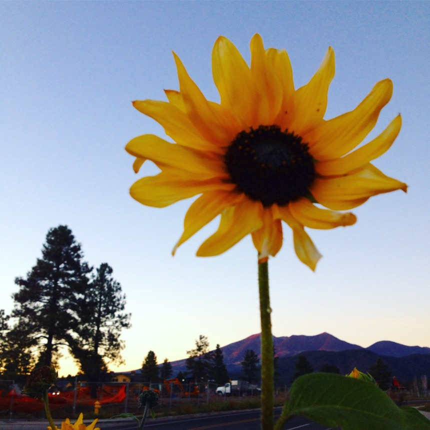 sunflower mountain © 2016 Holly Troy
