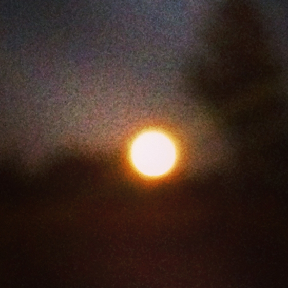 full moon after Halloween 2014 © Holly Troy 112014