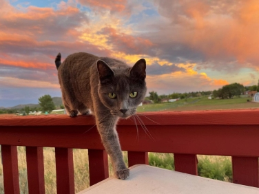 eddie at sunset © holly troy 8.1.2021