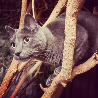 eddie kitty in the tree © Holly Troy 8