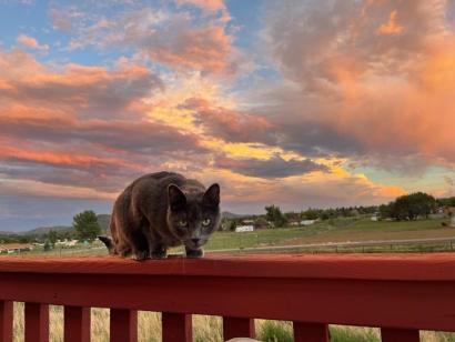 eddie sunset 3 © Holly Troy 8.2021