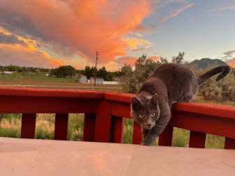 eddie sunset 5 © holly troy 8.2021