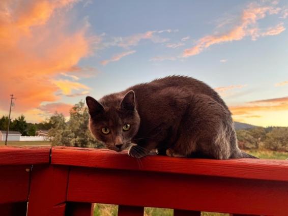 eddie sunset © Holly Troy 8.2021